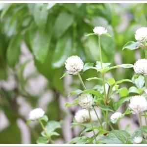 2連休のベランダのお花達 ♪