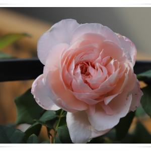10月初旬の3階ベランダのお花 ♪