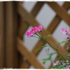 12月初旬のお花達 ♪