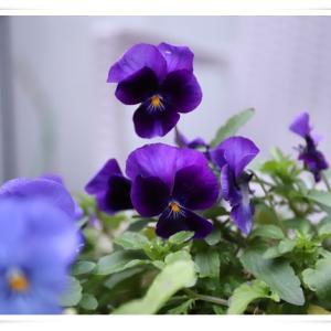 1月末のお花達 ♪