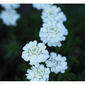 週末の玄関のお花 ♪