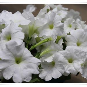 夏のお花は白色にしてみました ♪
