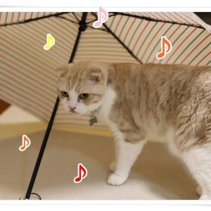 梅雨もまんざらじゃないにゃ !!!