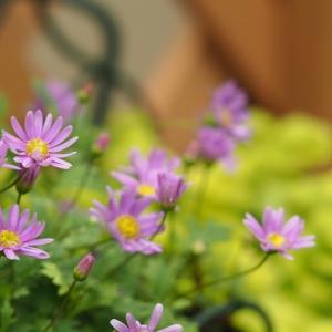 お花が増えてきました ♪