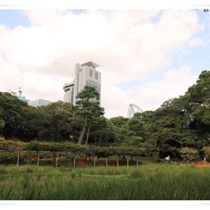 小石川後楽園に行ってきました ♪ パート2 ♪