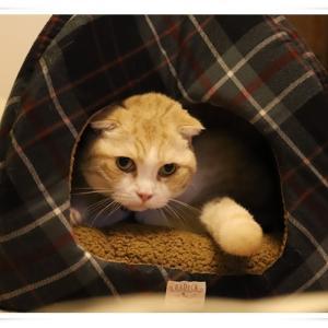 ムムちゃんにもう一つ冬用ベッドを出してあげました ♪