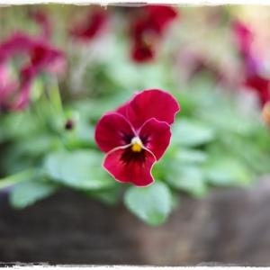 3階ベランダのお花 ♪