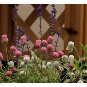 3階のベランダのお花 ♪ 花が少ないです (>_