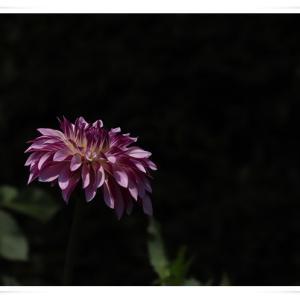 薔薇が見たくて、神代植物公園に行きました ♪ パート1 !