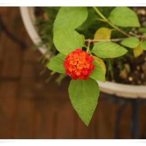 夏の3階のベランダのお花 ♪