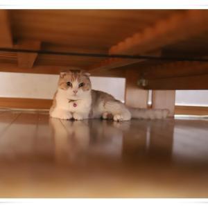 寝室の掃除を怠っているとベッドの下に潜るムムちゃん (T_T)