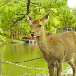 最新 お勧め 遠足のお弁当「必ずオニギリにしてください」 奈良の幼稚園が注意喚起→その理由が納得すぎた