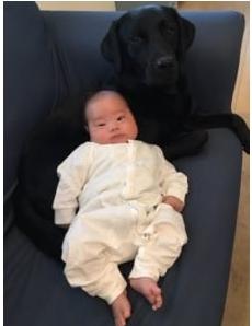 「母性が強い……」 黒ラブラドールが示すヒトの赤ちゃんへの愛情の深さに尊さあふれる