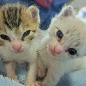 「親戚宅で猫が多頭崩壊。野生に帰すしかないのでしょうか」という地獄のような相談