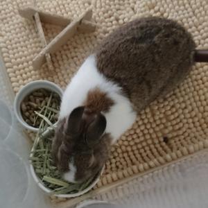 ウサギと 野草と 葡萄と