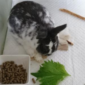 ウサギ達 の オヤツ