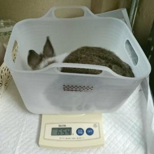 体重測定 と 別れの時