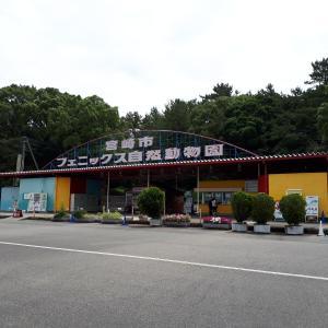 【宮崎市フェニックス自然動物園】広々とした動物エリアや遊園地などを解説します。フラミンゴショーは必見。