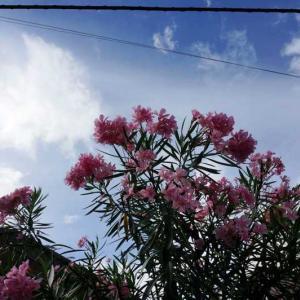 青い空と夏