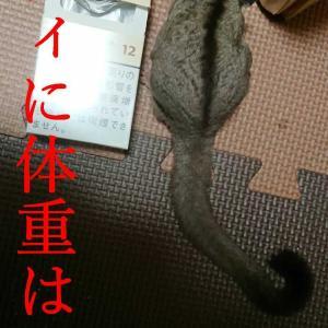 モモンガの体重