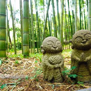 ベタな竹林風景
