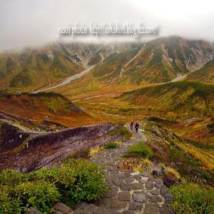 雷鳥沢へ続く山道