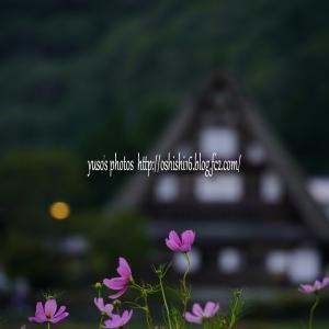 里山の秋 秋桜