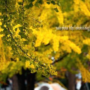 秋の葉 模様 壱
