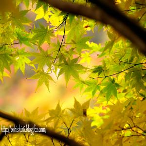 秋の葉 模様 弐