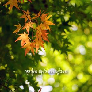 秋の葉 模様 参
