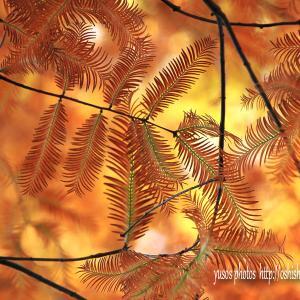 秋の葉 模様 肆