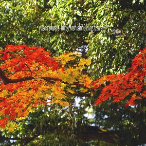 秋の葉 模様 伍