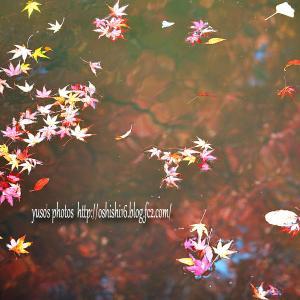 秋の葉 模様 陸