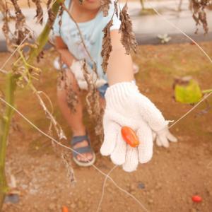 The Farm(ザファーム)で初めてのグランピング(5歳、2歳子連れ)本当に手ぶらでOK?②
