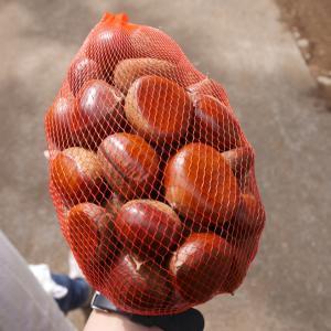 子連れ(5歳、2歳)で栗拾い!千葉の梨街道にある竹ノ内果樹園へ 子連れの秋の味覚狩りには栗拾いがおすすめ!