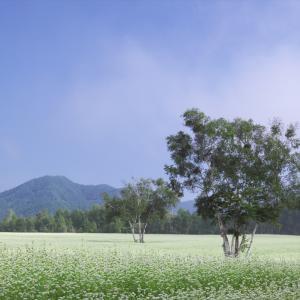 会津高原たかつえ 蕎麦畑 1