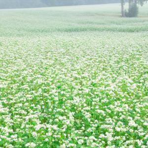 会津高原たかつえ 蕎麦畑 3