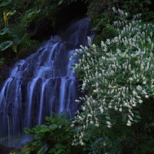 吐竜の滝 1
