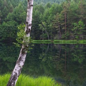 閑寂の池畔