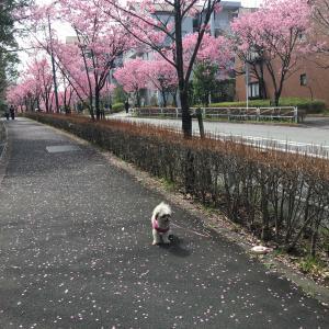 長池公園沿を散歩