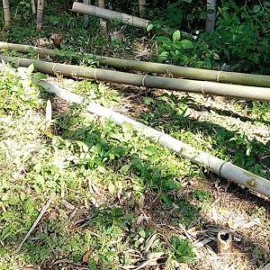 今日は竹を切りました