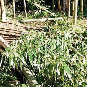 竹の伐採本日で完了です