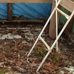 屋根が無いからスギ花粉のシャワー浴び放題