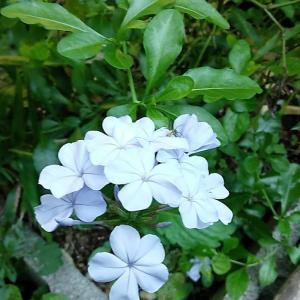 今日の竹藪のお花たち