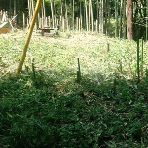 竹藪を所有しているメリットを(無理矢理)考えてみた