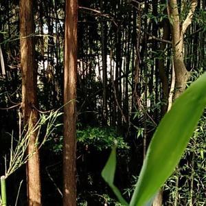 竹藪と戦うのはタケノコシーズンだけだと思っていた時期が私にもありました