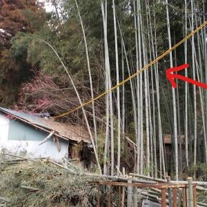 竹藪掘っ立てハウスの電気を解約する