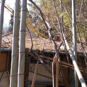 竹藪とシンボルツリー