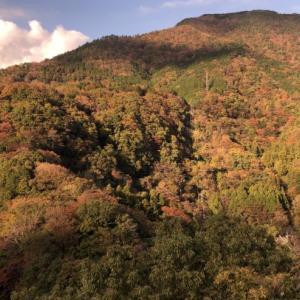少し早いが紅葉求めて箱根まで(Part2)
