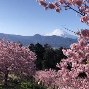 梅に桜に菜の花とまとめて詰め込んだルートで行ってきました